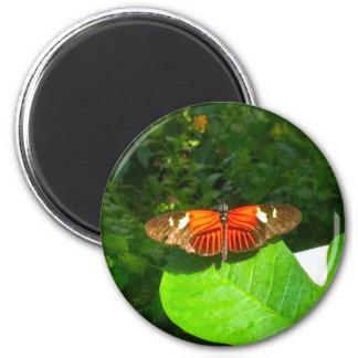 Papillon orange et noir aimant