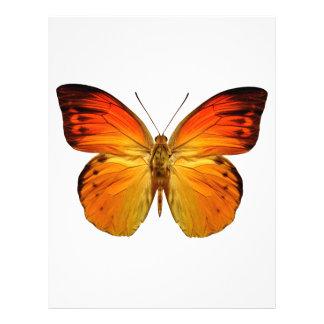 Papillon orange lumineux prospectus en couleur
