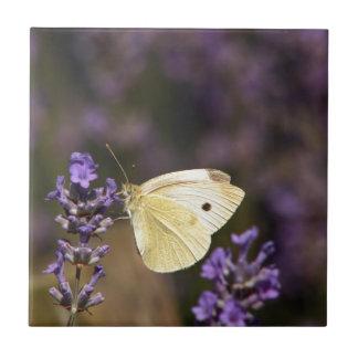 Papillon sur la lavande petit carreau carré