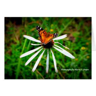 Papillon sur le coneflower blanc d'echinacée carte de vœux