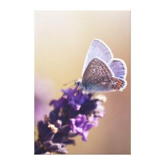 Papillon sur un brin de lavande toile