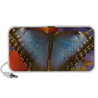 Papillon tropical 9 de Sammamish Washington Haut-parleur Mobile