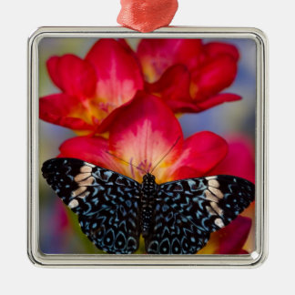 Papillons tropicaux 2 de Sammamish Washington Ornement Carré Argenté