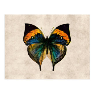 Papillons vintages de l'illustration 1800's de carte postale