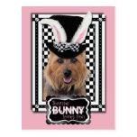 Pâques - un certain lapin vous aime - Terrier Cartes Postales