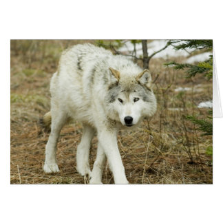 Paquet de dent de scie : Loups de la carte de note
