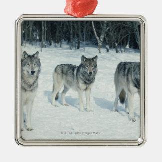 Paquet de loups au bord de la forêt neigeuse ornement carré argenté