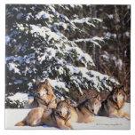 Paquet de loups en hiver carreaux