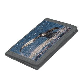 Paradis de surfers de flet de queue de baleine de