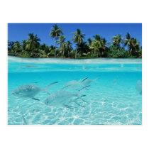 Paradis d'île carte postale