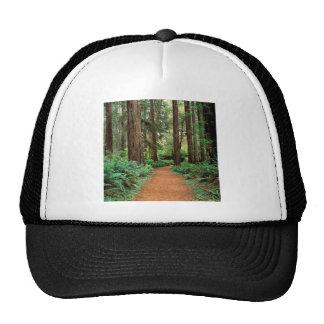 Parc de séquoias de prairie de forêt casquettes de camionneur