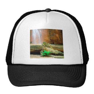 Parc d'état de séquoias de bassin de baie de casca casquette