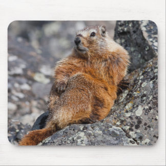 Parc national 1 des Etats-Unis, Wyoming, Tapis De Souris