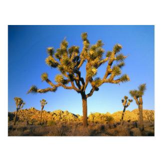 Parc national d'arbre de Joshua, la Californie. Carte Postale
