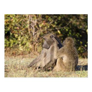Parc national de Kruger, Afrique du Sud Cartes Postales