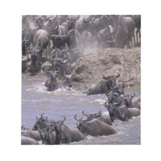 Parc national de l'Afrique, Kenya, Mara de masai Blocs Notes