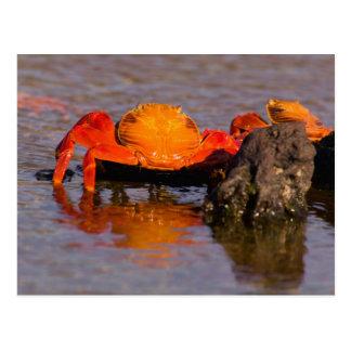 Parc national de l'Equateur, îles de Galapagos, 2 Carte Postale