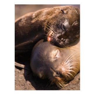 Parc national de l'Equateur, îles de Galapagos, Cartes Postales