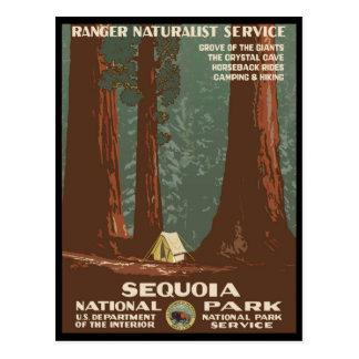 Parc national de séquoia carte postale
