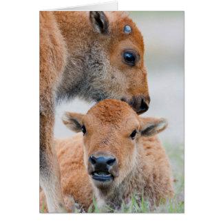 Parc national des Etats-Unis, Wyoming, Carte De Vœux
