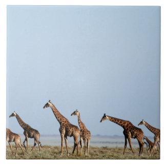 Parc national d'Etosha, Namibie 2 Grand Carreau Carré