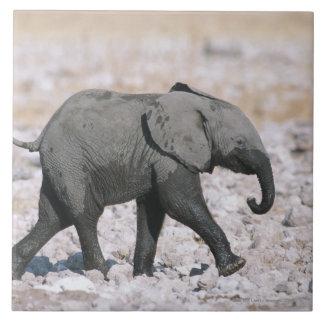 Parc national d'Etosha, Namibie Grand Carreau Carré