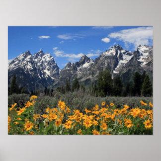 Parc national grand de Teton Poster
