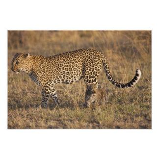 Pardus de Panthera de léopard) avec l'petit animal Tirages Photo