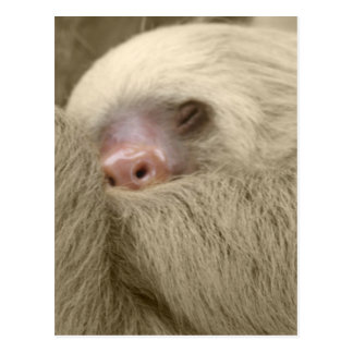 paresse somnolente carte postale