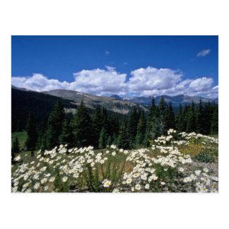 passage blanc de Boreas, fleurs de Breckenridge Carte Postale