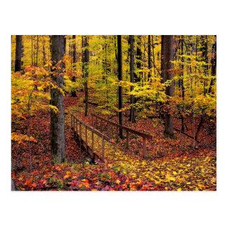 Passerelle d'automne, carte postale
