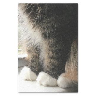 Pattes pelucheuses de chat papier mousseline