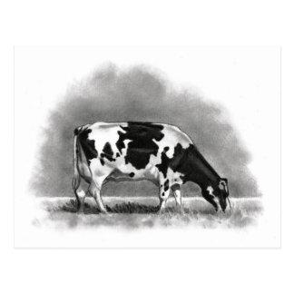 Pâturage de vache du Holstein : Dessin au crayon Carte Postale