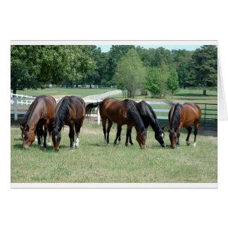 Pâturage des chevaux quarts cartes
