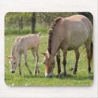 Pâturage du cheval et du poulain de Przewalski Tapis De Souris