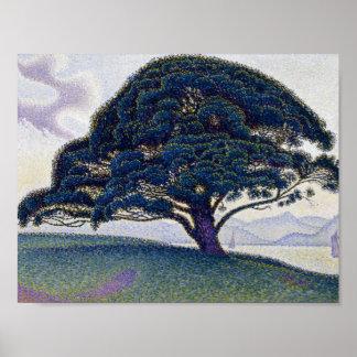 Paul Signac - le pin de Bonaventure Posters