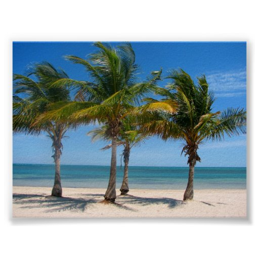 Paumes de Key Biscayne Affiches