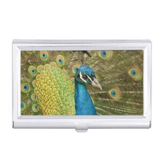 Pavanement de paon porte-cartes de visite