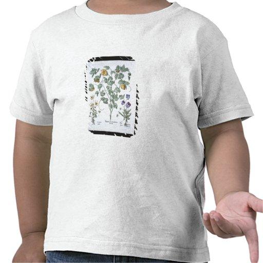 Pavot à cornes jaune, du 'Hortus Eystettensis T-shirts
