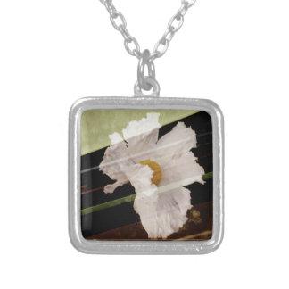 Pavot cultivé avec l'arrière - plan rayé collier