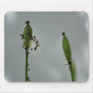 Pavots et ombre 5 tapis de souris