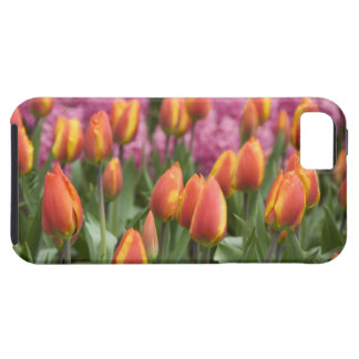 Pays-Bas (aka Hollande), Lisse. Keukenhof Coque Tough iPhone 5
