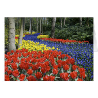 Pays-Bas, Hollande, Lisse, jardins de Keukenhof Carte De Vœux