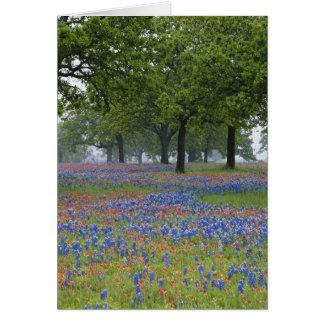 Pays de colline du Texas, le Texas, pinceau du Cartes