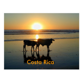 Pays de vache à Bejuco de carte postale, Costa