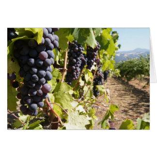 Pays de vin de la Californie Carte De Vœux