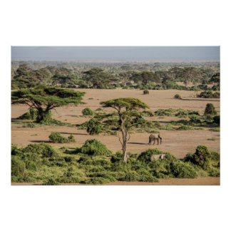 Paysage africain avec l'éléphant poster