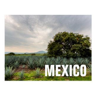 Paysage avec l'agave bleu carte postale
