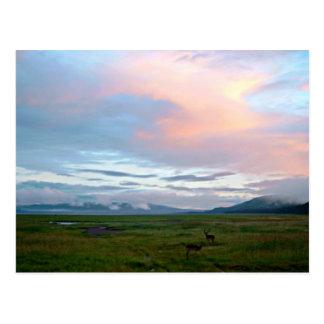 Paysage avec le ciel bleu et les antilopes de carte postale