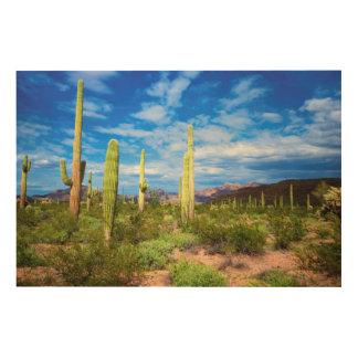 Paysage de cactus de désert, Arizona Impression Sur Bois